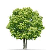 Strom pro přírodu