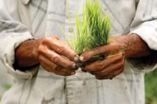 Zelené trávy aneb nechme se inspirovat přírodou
