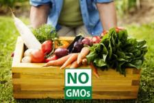 Dopady GMO na člověka, zvířata a životní prostředí