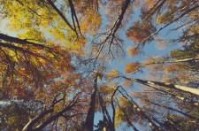 Strom jako terapeut