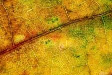 Podzimní detoxikace