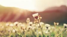 6 tipů pro spokojená játra