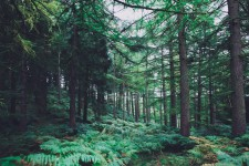 Tajga, prales, savana i step pomáhají chránit naši imunitu