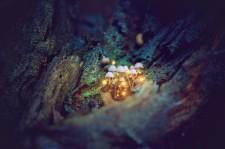 Kouzelné houbičky