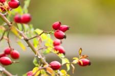 Podzim patří imunitě: Hýčkejte své zdraví! (II)