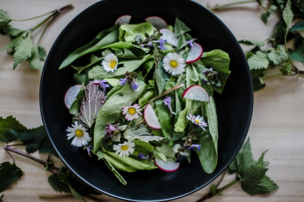 Spring Salad with Wild Blossoms